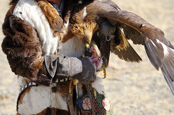 The golden eagles Festival in Altai