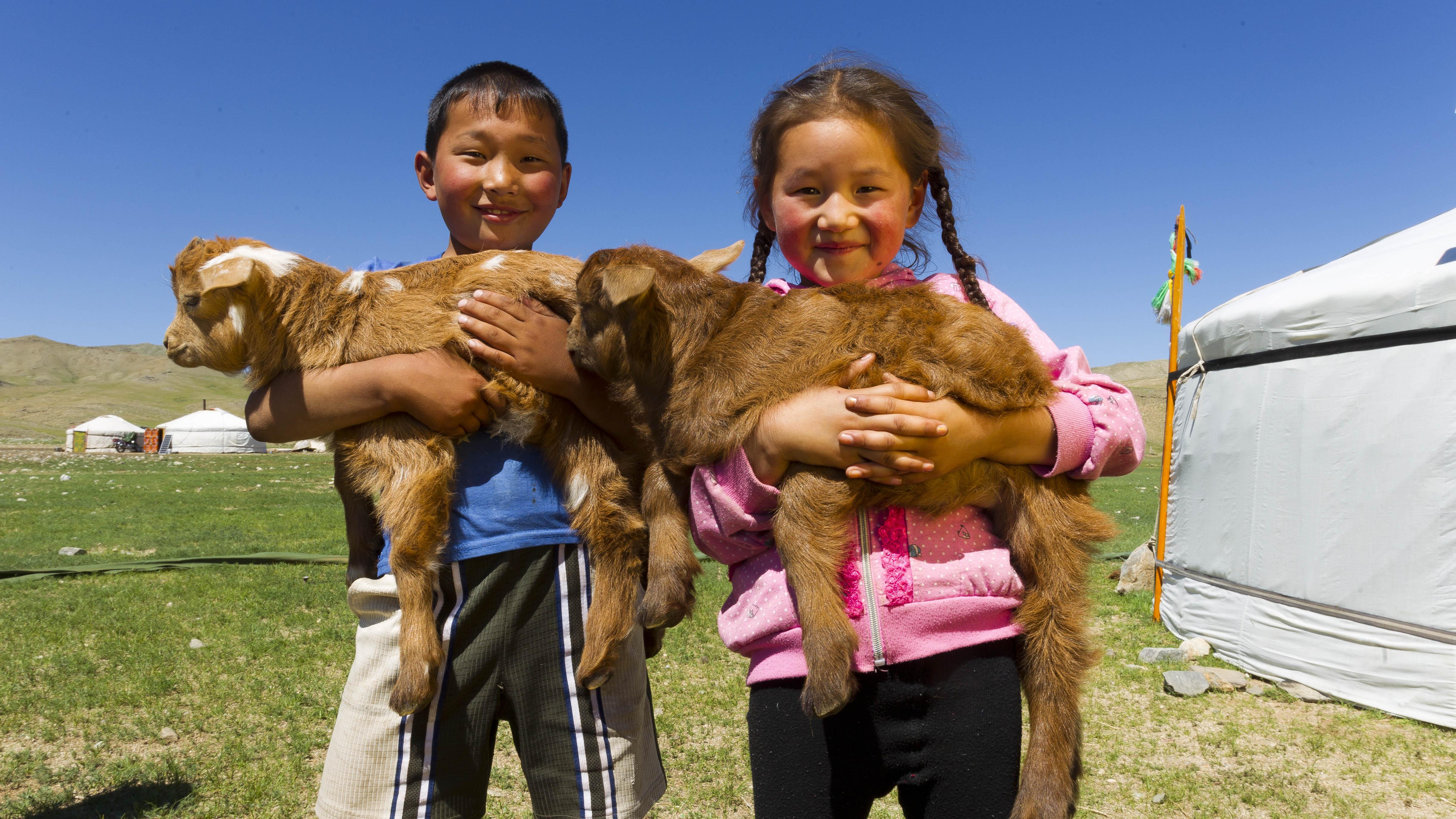 Demographics of mongolia horseback mongolia for Choupi et doudou a la piscine